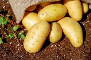 Les pommes de terres ne contiennent pas de gluten